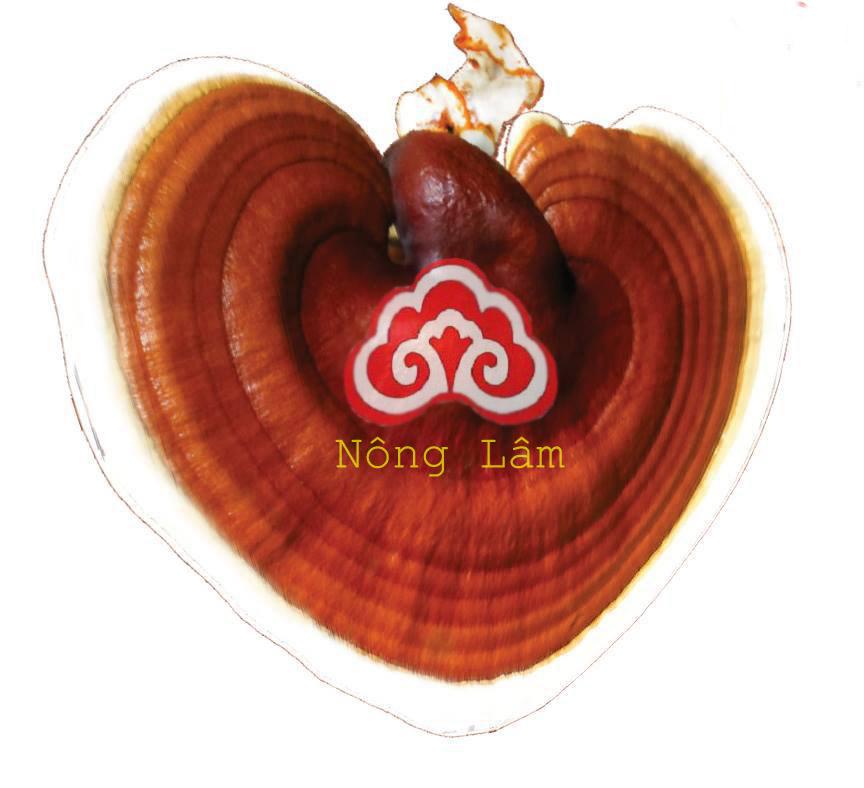 Thông điệp nhân ái - Linh Chi Nông Lâm